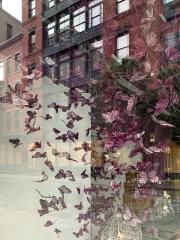 BUTTERFLIES - SOHO - NEW YORK