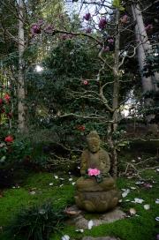 JAPANESE GARDEN - LOTUSLAND