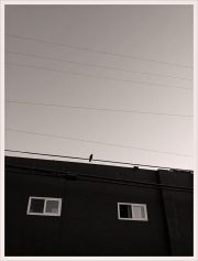 BIRD ON A WIRE - VENICE, CALIFORNIA